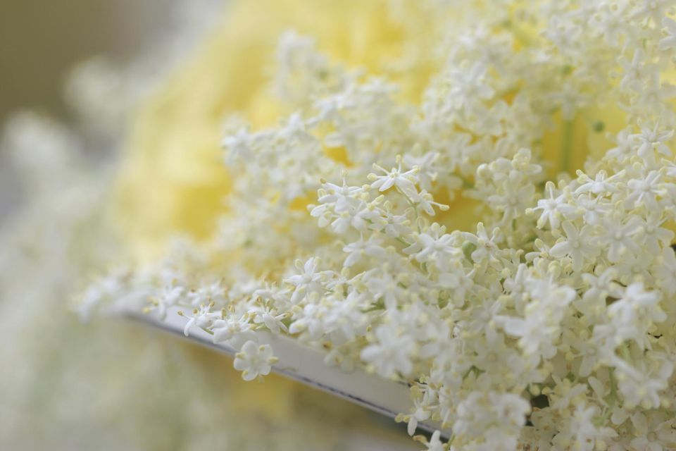 Elderflower Syrup Recipe for Beverages and Toppings